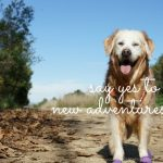 {This Moment} See Beautiful: Yes to New Adventures
