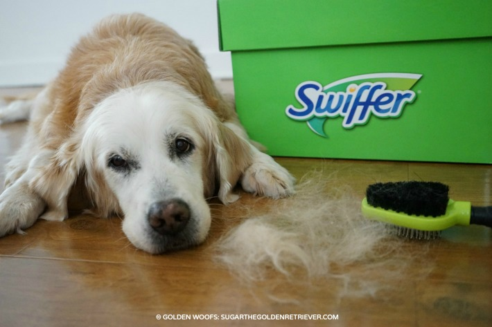 Shed Happens! Swiffer takes care of Pet Hair