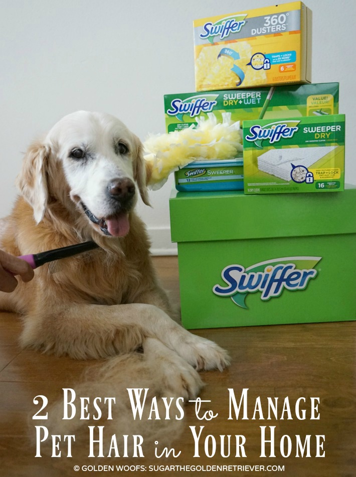 shed happens! daily grooming and swiffer take care of pet hair