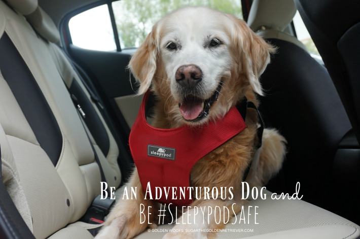 Be an Adventurous Dog and #BeSleepypodSafe