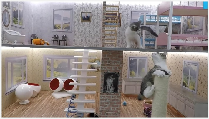 Once again the CATS Rule the Internet! A new CAT Reality Show titled Keeping up with the Kattarshians features kittens living in an oversized dollhouse.