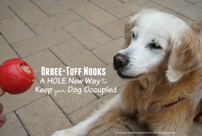 Orbee-Tuff Nooks | A Hole New Way To Keep Your Dog Occupied