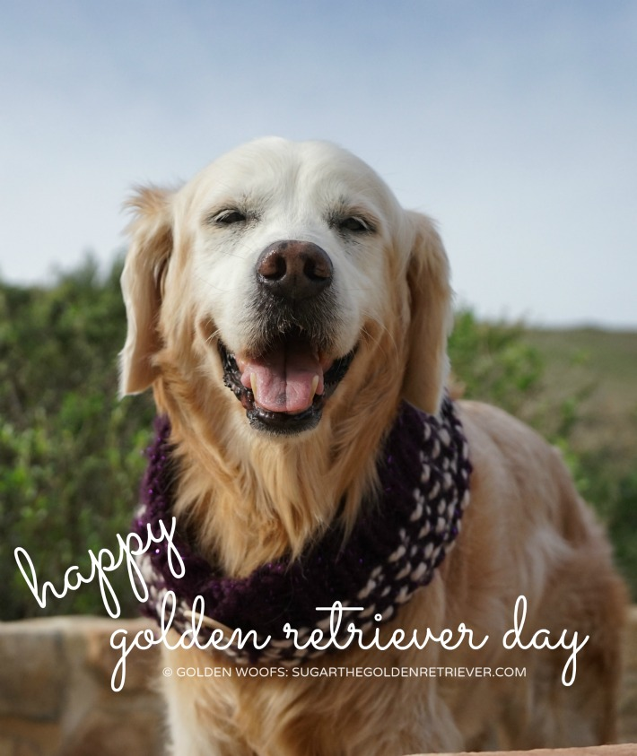 Happy International Golden Retriever Day