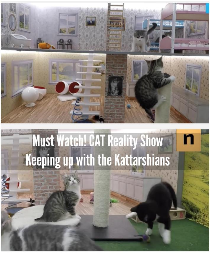 Keeping up with the Kattarshians