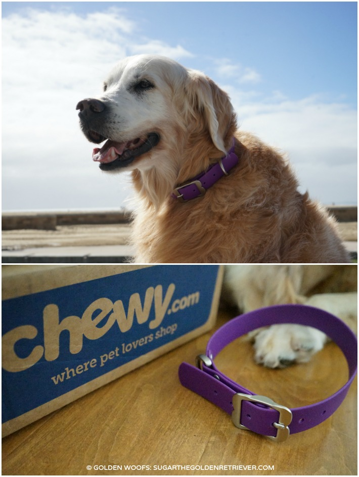 Red Dingo PVC Dog Collar CHEWY.COM