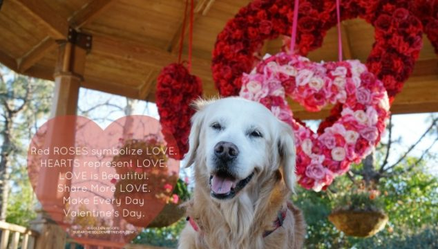 Share More LOVE | Make Every Day Valentine's Day