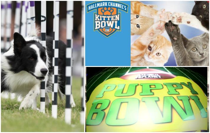 Pre Super Bowl Pet Shows