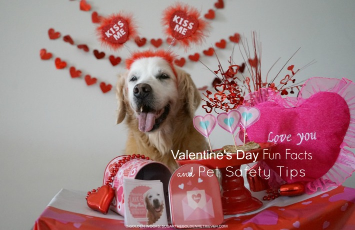 Valentine's Day Fun Facts and Pet Safety Tips