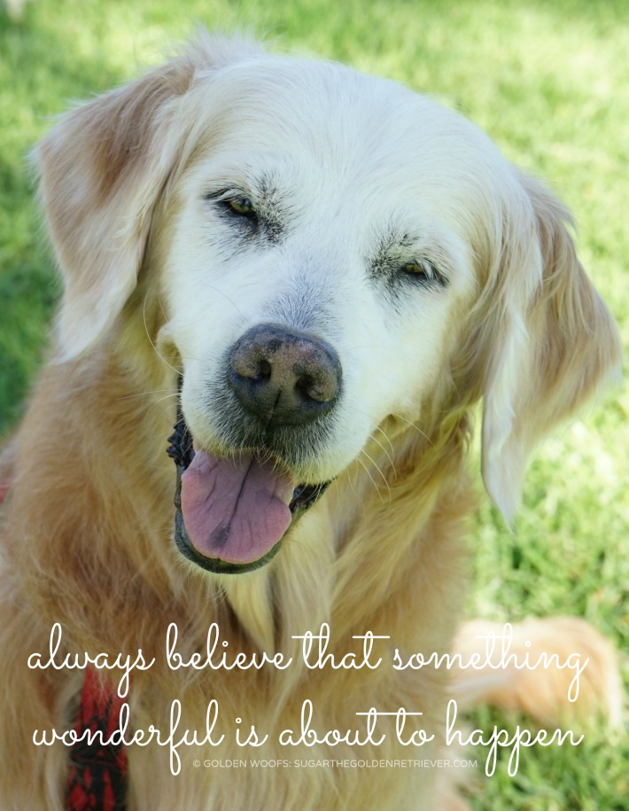 quote: Always believe that something wonderful is about to happen
