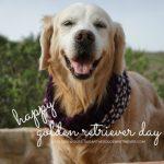 Happy International Golden Retriever Day