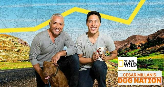 Cesar Millan Dog Nation
