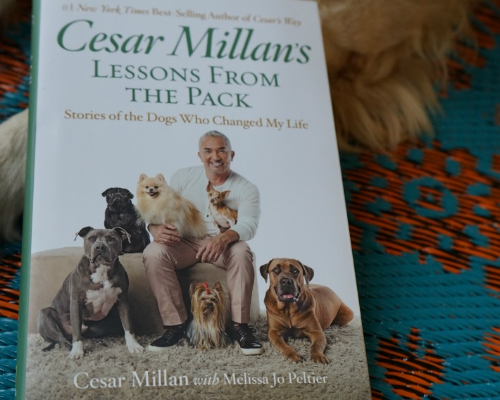 Cesar Millan's Lesson from The Pack