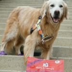 Help Senior Dogs | #StandUp4Shelters with #StellaandChewys