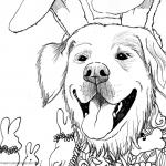 Color Bunny Dog SUGAR