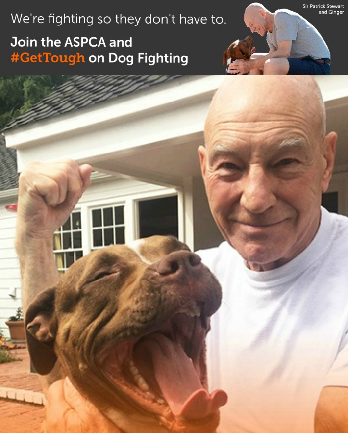 dog fighting ASPCA Get Tough