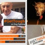 It's Time to #GetTough on Dog Fighting