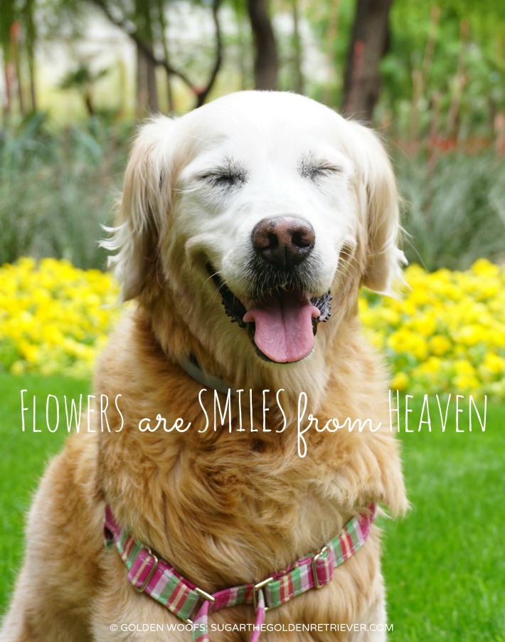 flowers are SMILES from Heaven
