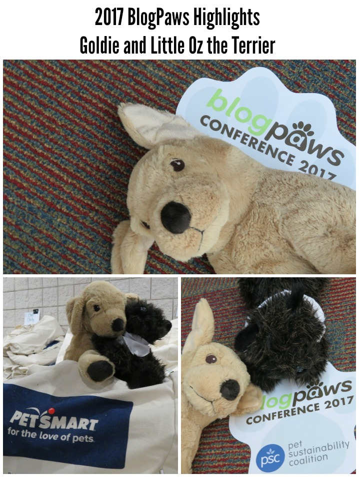 2017 BlogPaws Highlights Goldie OZ