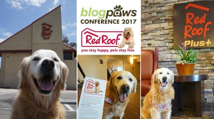 Golden Thanks to #BlogPaws and Red Roof Inn #RedRoofLuvsPets