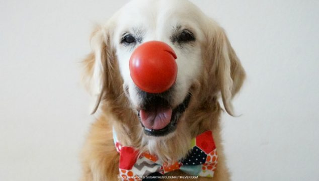 Red Nose Day! Get Silly For A Good Cause