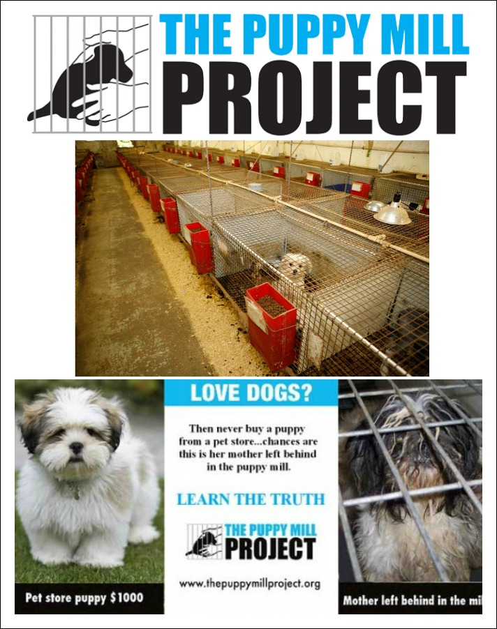 the puppy mill project Puppy mills disregard the dogs' health—both physical and emotional—in order to   a big thank you went out from the puppy mill project to commissioner john.