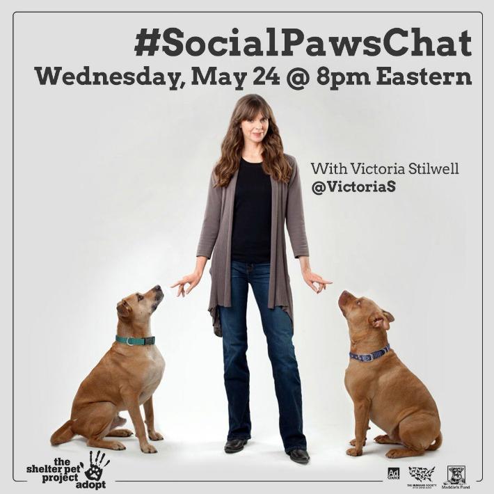 Victoria Stilwell SocialPawsChat