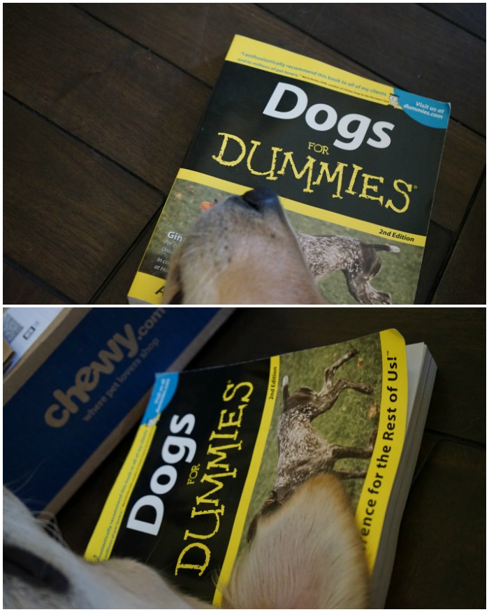 dog owner's reference book dogs for dummies