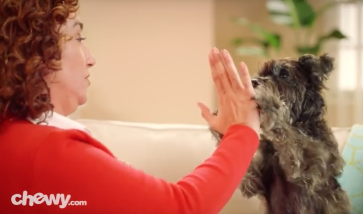 oz the terrier chewy.com tv commercial