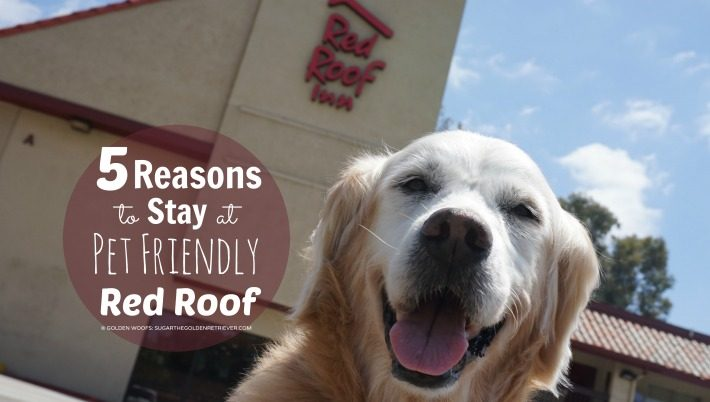 5 Reasons to Stay at Pet Friendly Red Roof