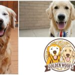 New Golden Woofs Logo