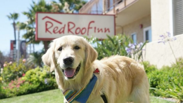 Weekend Road Trip | Pet Friendly Accommodation at Red Roof Inn