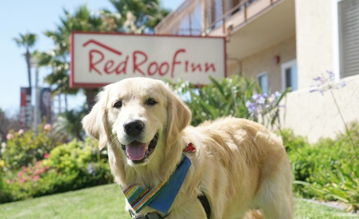 Pet Friendly Accommodation Red Roof Inn