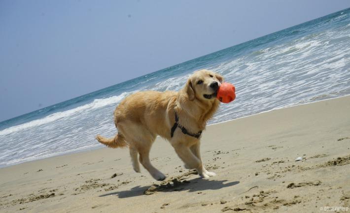 Puppy's First Off Leash Dog Beach