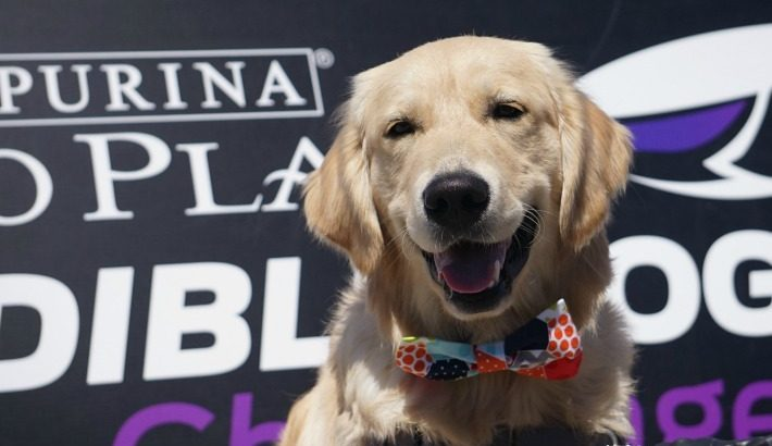 20 Years Of The Incredible Dog Challenge – Call For Incredible