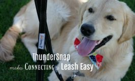ThunderSnap Makes Connecting a Leash Easy