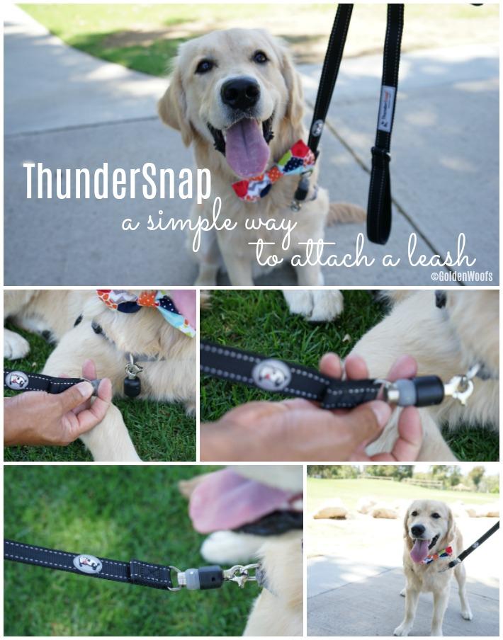 ThunderSnap easy attach a leash