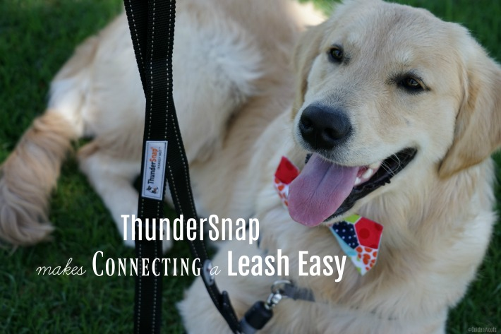 ThunderSnap Makes Connecting a Leash Easy