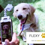 Flexy Paw: Get Your Pet's Attention and Capture Pawfect Photos