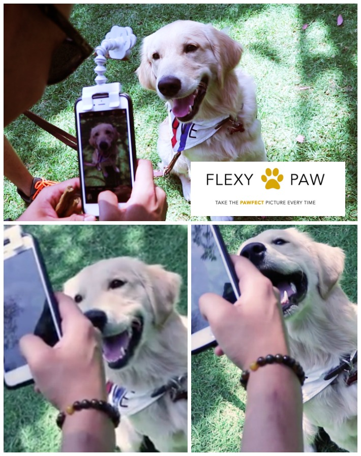 flexy paw capture pawfect photos