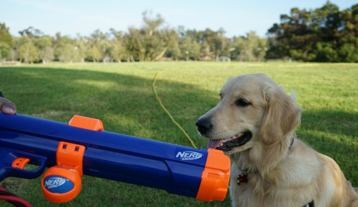 Nerf Tennis Ball Launcher for Dogs  #ChewyInfluencer