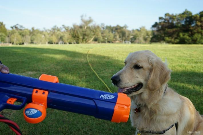 nerf dog ball launcher