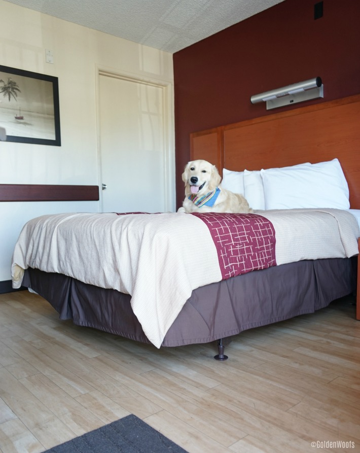 pet friendly red roof in accommodation