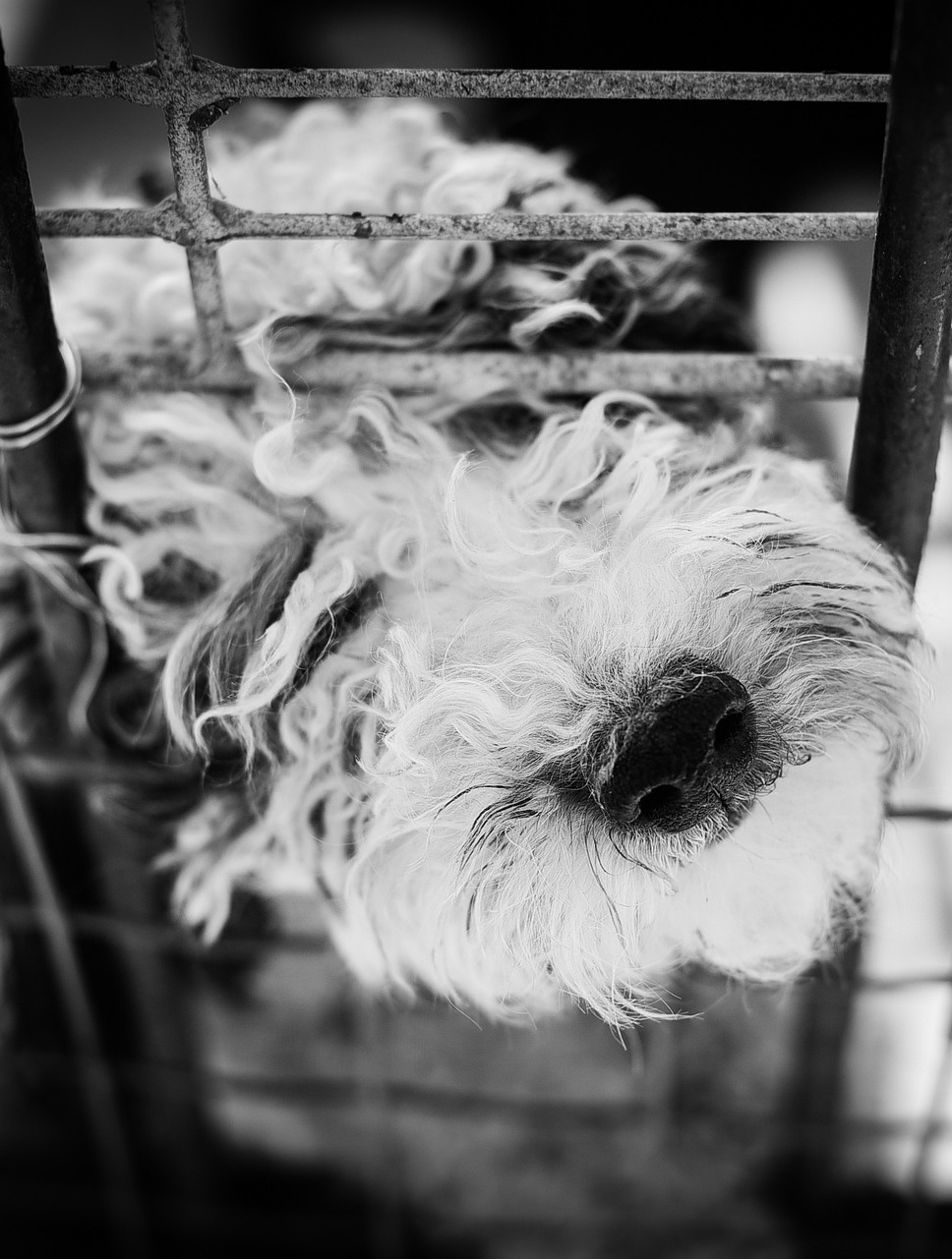 How To Avoid Buying From a Puppy Mill
