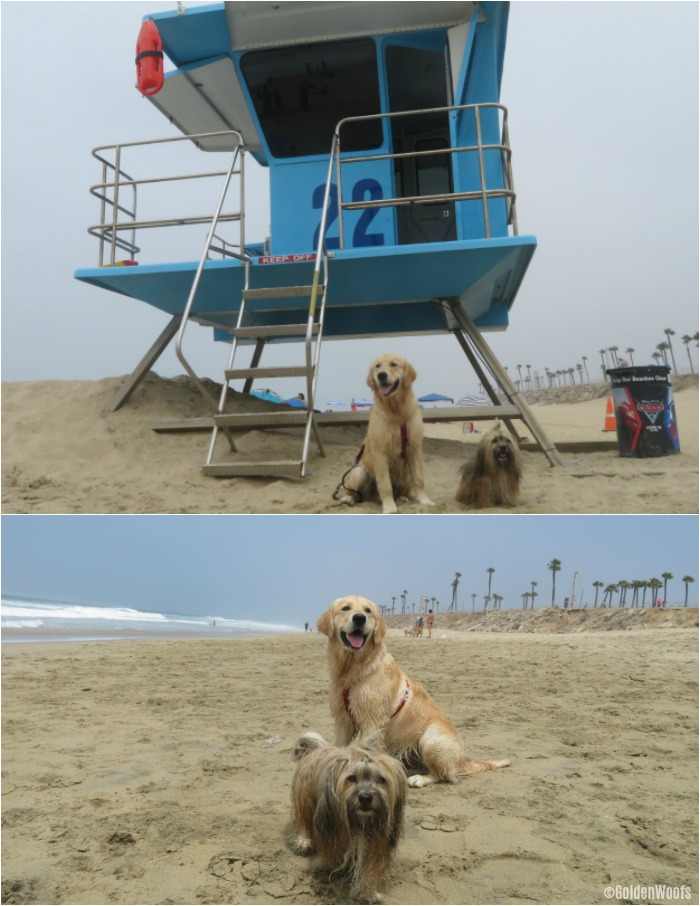 wet dogs - beach dogs
