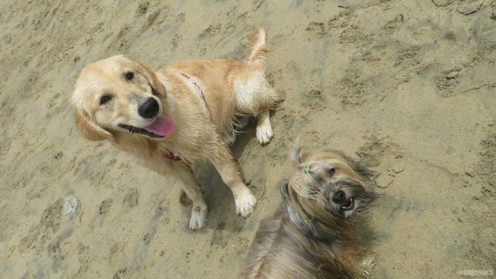 Wet Dogs | Beach Fun with Blog Pal Rocco