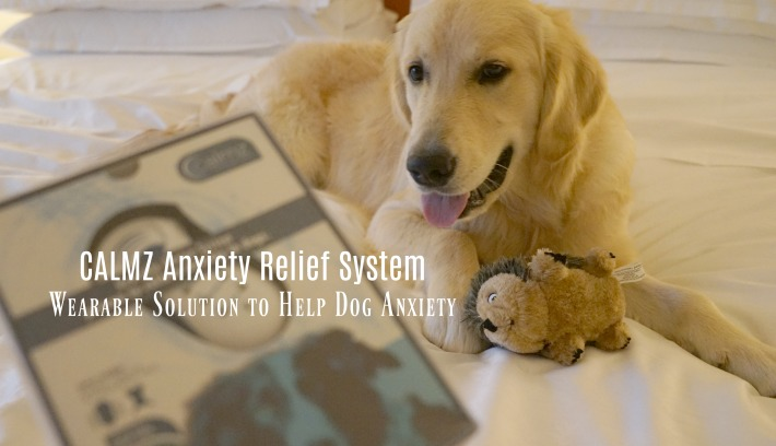 CALMZ Anxiety Relief System | Wearable Solution to Help Dog Anxiety