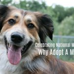 Celebrating National Mutt Day | Why Adopt A Mutt?