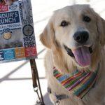 Summer Fun Trip with Plato Hundur's Crunch #ChewyInfluencer