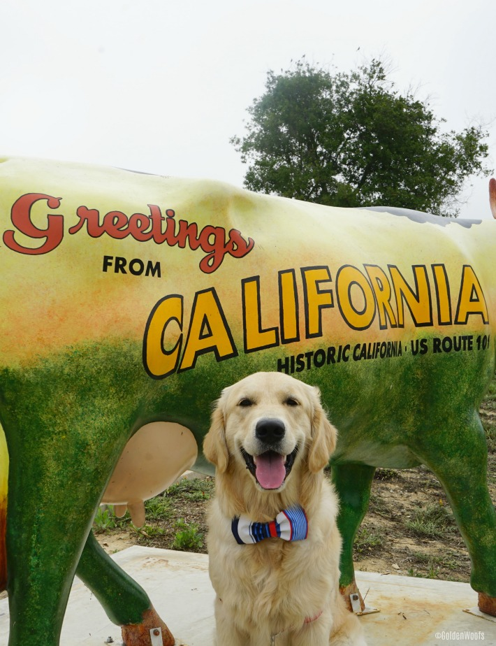 Greetings from california golden woofs greetings from california m4hsunfo