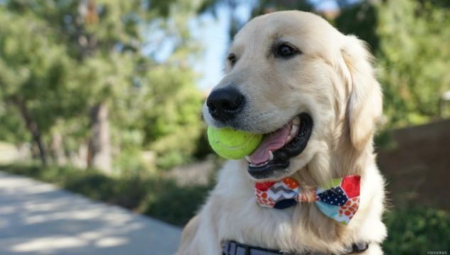 Happiness is a Dog and his Tennis Ball